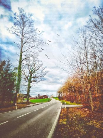 Winter Wintertime Birds Clouds And Sky On The Road Switzerland Trees Colors Cold Cycling