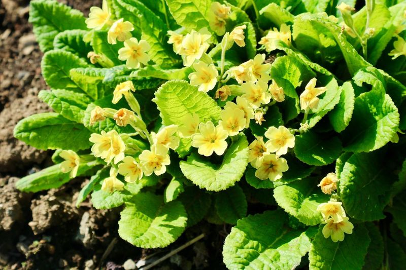 Little Yellow Flower Green Color Leaf Growth Plant Part Plant Beauty In Nature Day Food And Drink Outdoors Fragility High Angle View Sunlight Food Freshness Nature No People Botany Vulnerability  Flower Close-up