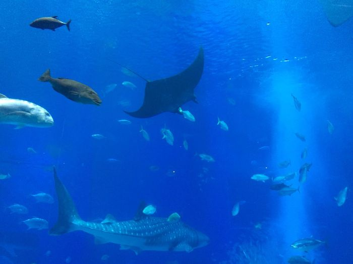 Animal Animal Themes Animal Wildlife Animals In The Wild Fish Group Of Animals Sea Underwater Water Blue Nature Marine Aquarium