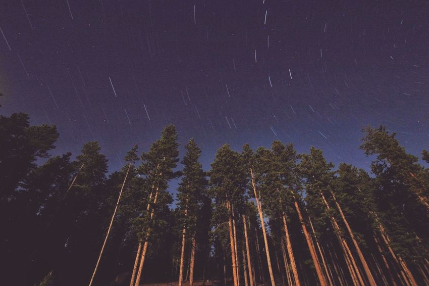 Astronomy Galaxy Space Tree Milky Way Star - Space Star Trail Constellation Mountain Forest Star Field Space And Astronomy Star Starry Sky Only Pine Woodland Spruce Tree Coniferous Tree Globular Star Cluster HUAWEI Photo Award: After Dark