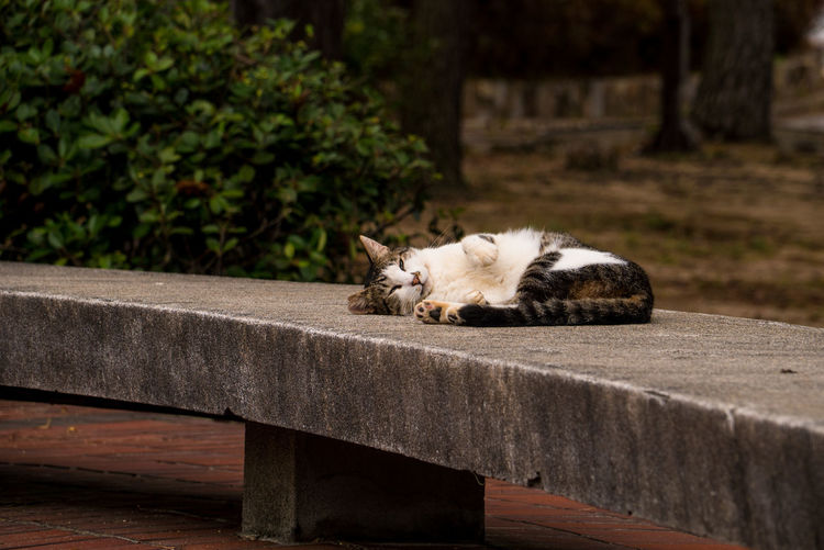 Cats Of EyeEm EyeEm Gallery Animal Animal Themes Bench Cat Day Domestic Domestic Animals Domestic Cat Eyes Closed  Feline Focus On Foreground Mammal No People One Animal Outdoors Pets Relaxation Resting Sleeping Streetphotography Vertebrate Whisker Wood - Material Holiday Moments