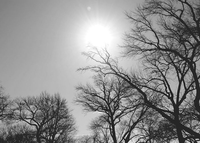 Bare Tree Beauty In Nature Black And White Blackandwhite Blackandwhite Photography Blue Branch Lens Flare Low Angle View Nature No People Outdoors Scenics Sky Sun Sunbeam Sunlight Tranquil Scene Tranquility Tree