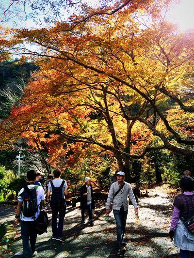 Relaxing 紅葉 京都Japan 嵐山
