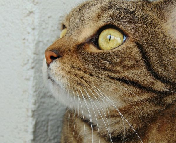 Cats Cat Eyes Animals Folowme кот котэ няша лапа шотландец пупсик усатик Природа красота