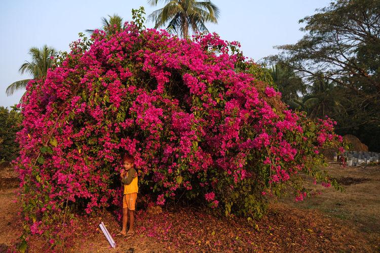 Mrauk U, Myanmar, Feb 2019. Fujifilm X-t3 Myanmar Mrauk-U Streetphotography Travel City Fujifilm_xseries Burma Blossom Tree