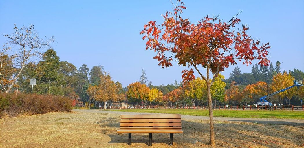 Park bench by trees on field against sky during autumn