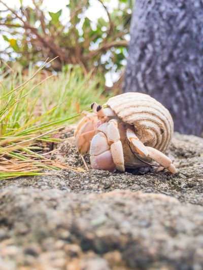 EyeEm Selects Hermit Crab オカヤドカリとか、久しぶりな。 Outdoors Nature No People Done That. Been There. From My Point Of View Summer EyeEm Gallery The Week On EyeEm Beauty In Nature Walking Around Wildlife