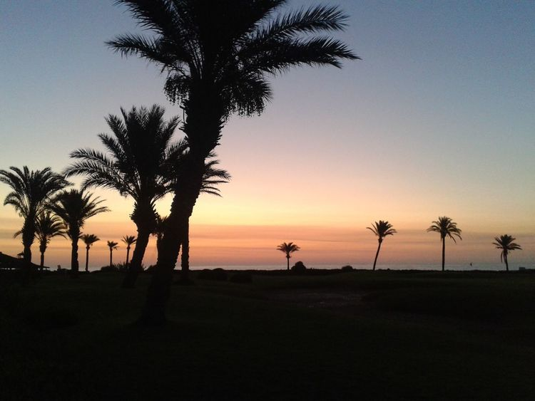 On the beach... No. 4 pic Dominogirl Sunset Palm Tree Sun Coastline Sunshine Sunset Path Twilight Sky Tree Sky
