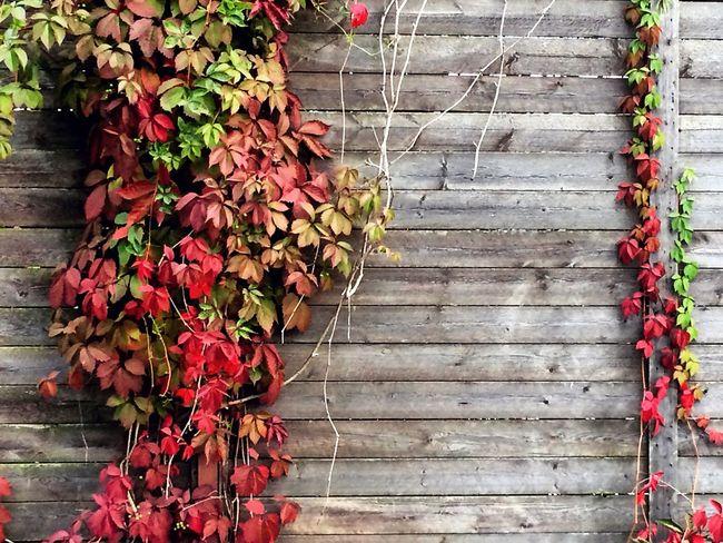 Autumn Orange Red Yellow Plants Fance Village Relaxing Hello World Like Foliage