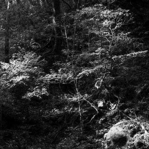 Nature Tree Yakushima Japan 2012 Blackandwhite Monochrome Woods Forest Black & White