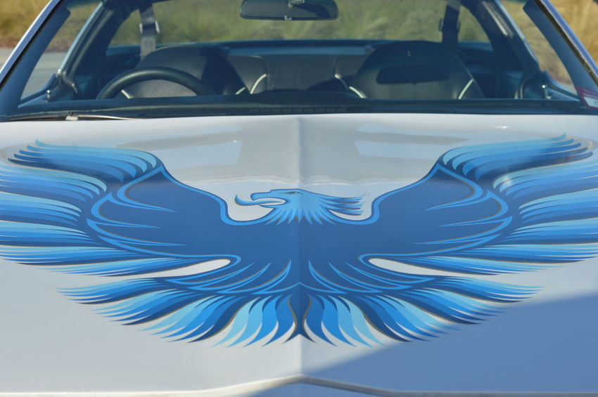Blue Bonnet Car Close-up Custom Firebird Pontiac Trans Am