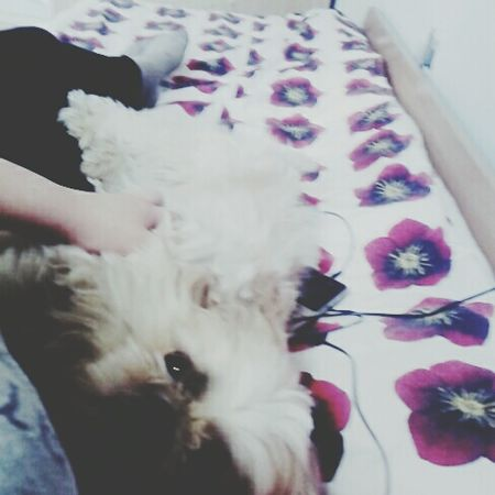 Mydog♡ Dog❤ Dog Love Love ♥ Liubov:3 Lithuania Folowforfollow Girl Panevėžys Taking Photos Lithuanian Girl FolowMe ✌ Cute♡ That's Me Sleep Folowme Kupidonas
