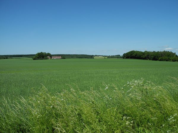 Sunny summer day in the countryside of Sorø on the island of Zealand in Denmark - Tranquil Scene Scenics Landscape Tranquility Blue Green Color Growth Clear Sky Rural Scene Field Beauty In Nature Agriculture Nature Farm Outdoors Day Non-urban Scene Distant No People Green Sorø Zealand Denmark Danish