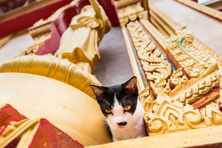 Close up small kitten with mother in the temple.Phuket.Thailand Pets Domestic Domestic Animals Mammal Animal Themes Animal Domestic Cat Cat Vertebrate One Animal Feline No People Religion Relaxation Focus On Foreground Belief Spirituality High Angle View Portrait Place Of Worship Whisker