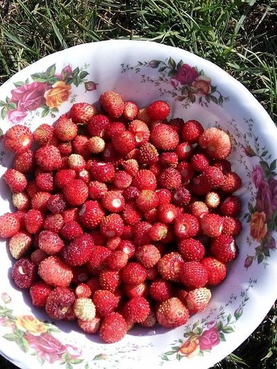 Fruit Healthy Eating Red Food Freshness Strawberry Food And Drink High Angle View No People Bowl Large Group Of Objects Day Sweet Food Outdoors Close-up Nature Ready-to-eat