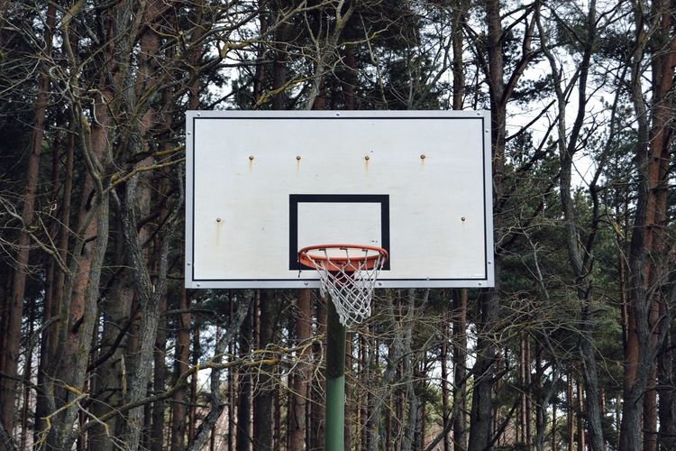 Low angle view of basketball hoop against trees in forest