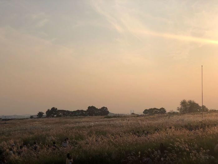 숨바꼭질 ShotOnIphone Sky Tranquility Tranquil Scene Landscape Beauty In Nature Environment Scenics - Nature Plant Field Land Sunset No People Cloud - Sky Sun Nature Rural Scene Growth Tree Agriculture Idyllic
