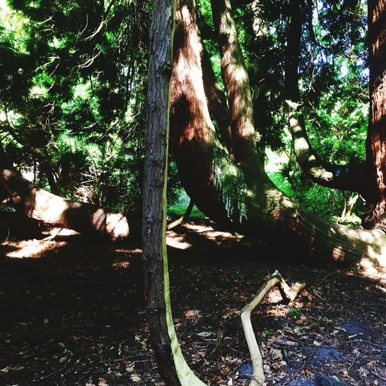 View of a tree trunk in the forest