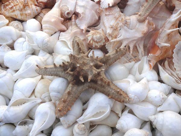 Coquillages Shells🐚 étoile De Mer Starfish  Ocean❤ India