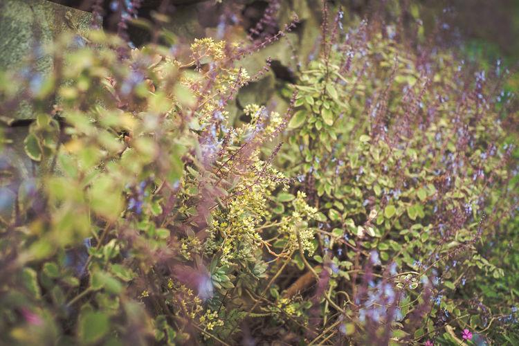Fresh Herb Garden Lejardin Green Yelloe Vintage Close-up Animal Themes Plant Blooming Petal In Bloom