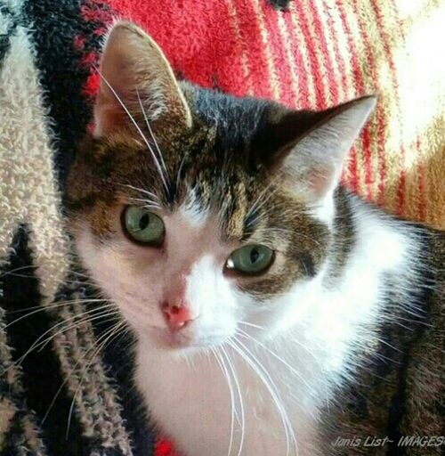 Cat Eyes Cats Pets Love Sweet Adorable Cute Pets Cuddly Meet Doc