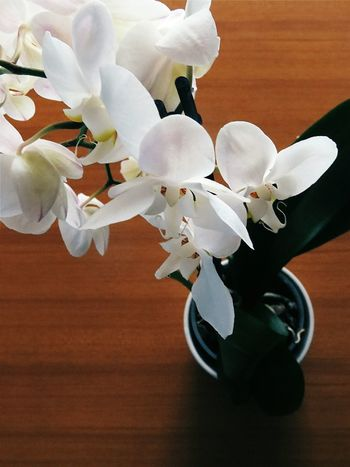Orchid Plants From Above  Fromthetop Onthetable Indoors  No People Nature Flower Flowers Still Life Day Tranquility Beauty In Nature Minimal The Week On Eyem EyeEm Gallery EyeEm Best Shots EyeEmBestPics Eye4photography