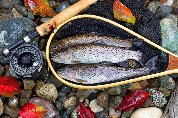 Directly above shot of trouts in net by fishing rod on stones during autumn