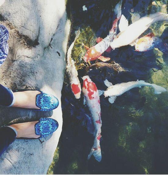 물고기..잉어? Relaxing Fish Thinking Of