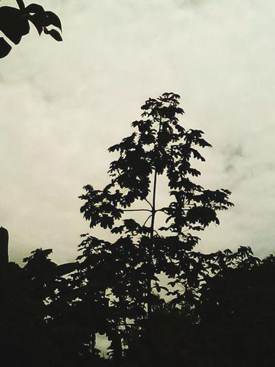 Rainy Day 🆗🆒