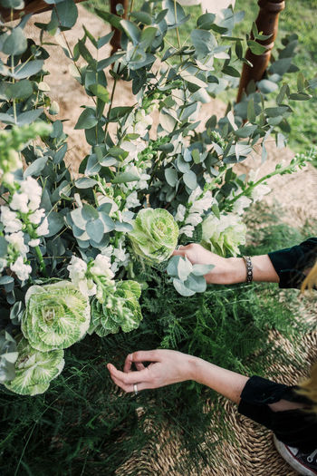 High angle view of woman hand amidst plants in field