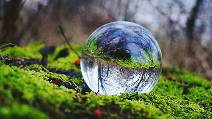 Sphere Crystal Ball Nature Close-up No People Outdoors Day Planet Earth Autumn 2016 December2016 Bokeh The Places I've Been And The Things I've Seen Tree_collection  Deep In The Woods TreePorn Forest Moos Green Color Backgrounds Outdoors Leaf Green Green Green!