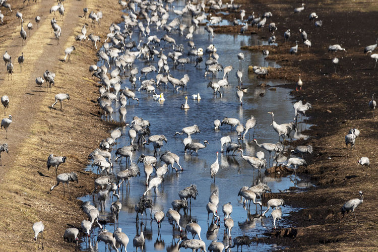 High angle view of birds in lake during winter