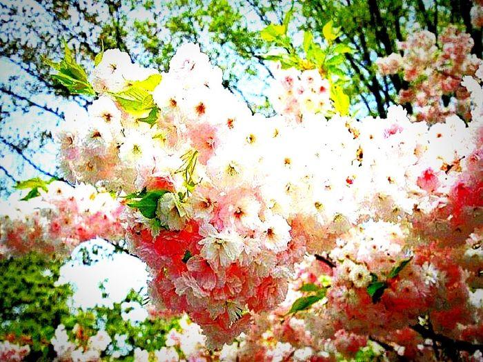 Bahar icin sayılı gunler