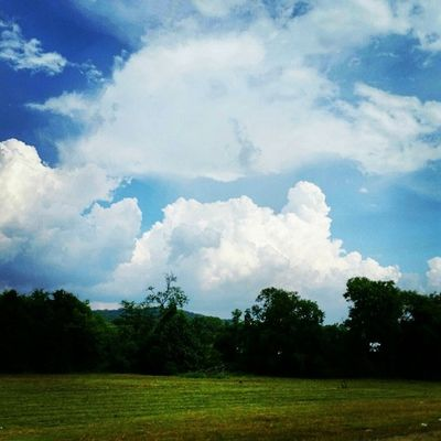 AFTER THE STORM Insta_exploring Instatennessee USA Tennessee Lebanon Home_sweet_home Summer Trees Greenery Nature Bluesky CLOUDSPACE