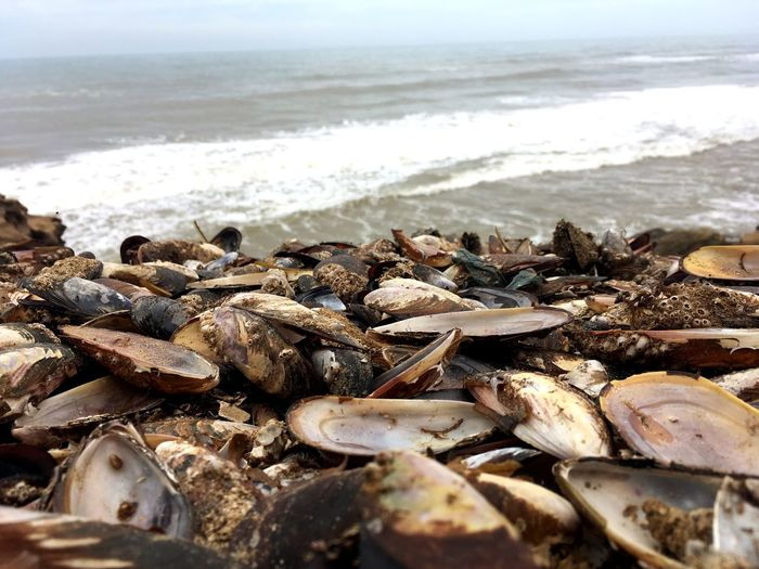 Close-up of mussels on beach