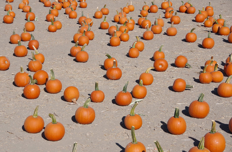 View of pumpkins
