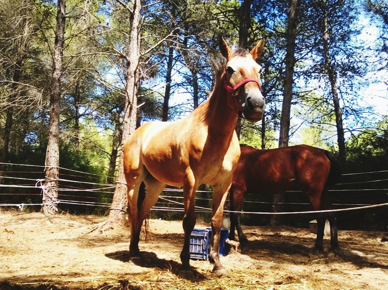 HORSE STANDING IN RANCH AGAINST TREES