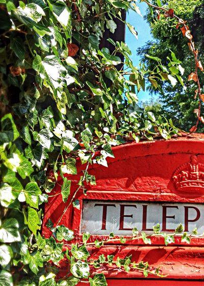 Telephone Box Red Blue Sky Greens