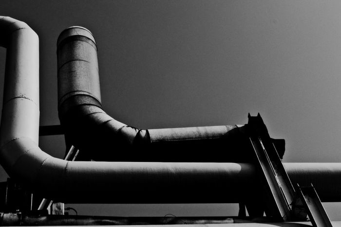 Batory Steelworks / Huta Batory, Chorzów, Poland Architecture Black And White Building Built Structure Clear Sky Construction Day Geometry Geometry Shapes Industrial Industry Ironwork  Pipe Pipe - Tube Pipeline Shape Shapes Steelwork Structure TakeoverContrast Monochrome Photography The Architect - 2018 EyeEm Awards