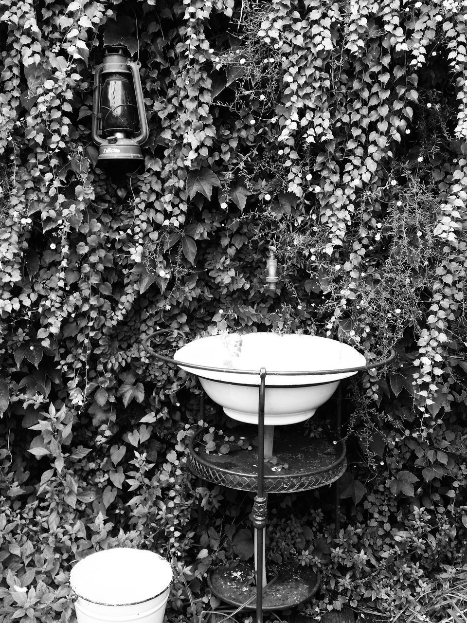 plant, no people, nature, day, growth, front or back yard, outdoors, wall - building feature, lighting equipment, absence, leaf, seat, hanging, toilet, plant part, old, technology, bathroom, high angle view, land