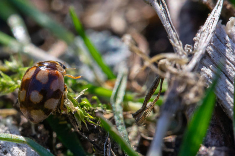 Close-up of insect on field