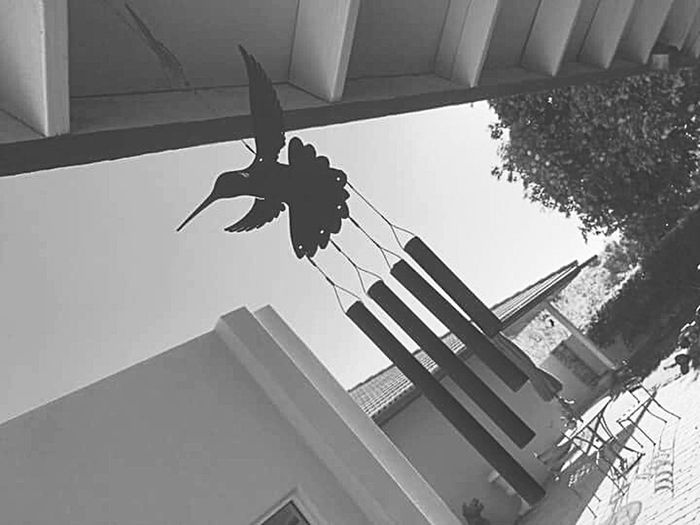 ill be with you. Hummingbird Simple Lifeisajourney Day First Eyeem Photo Blackandwhitephotography Highviews Embrace The Moment EyeEmNewHere