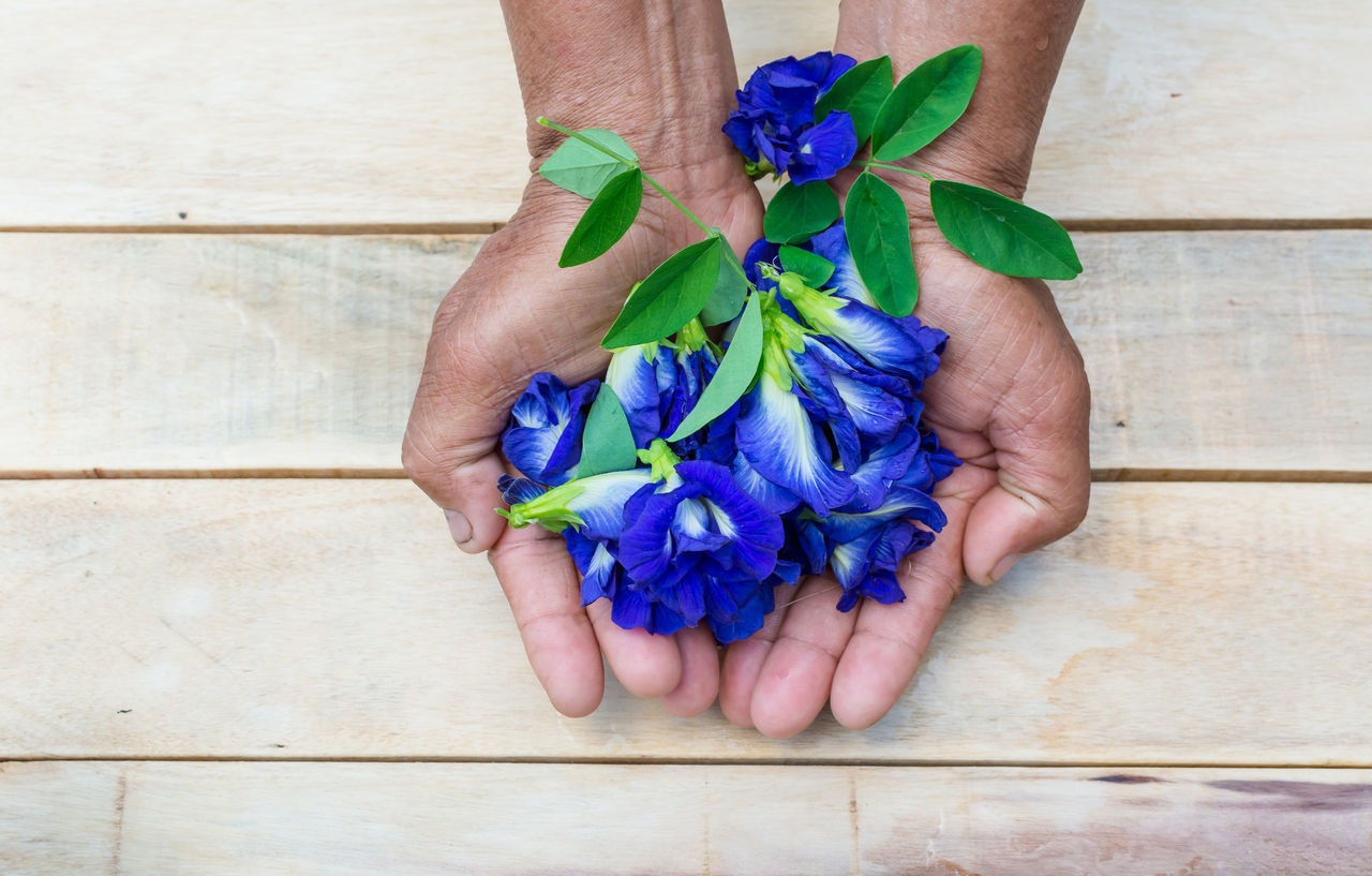 Cropped Hands Holding Blue Flowers On Table