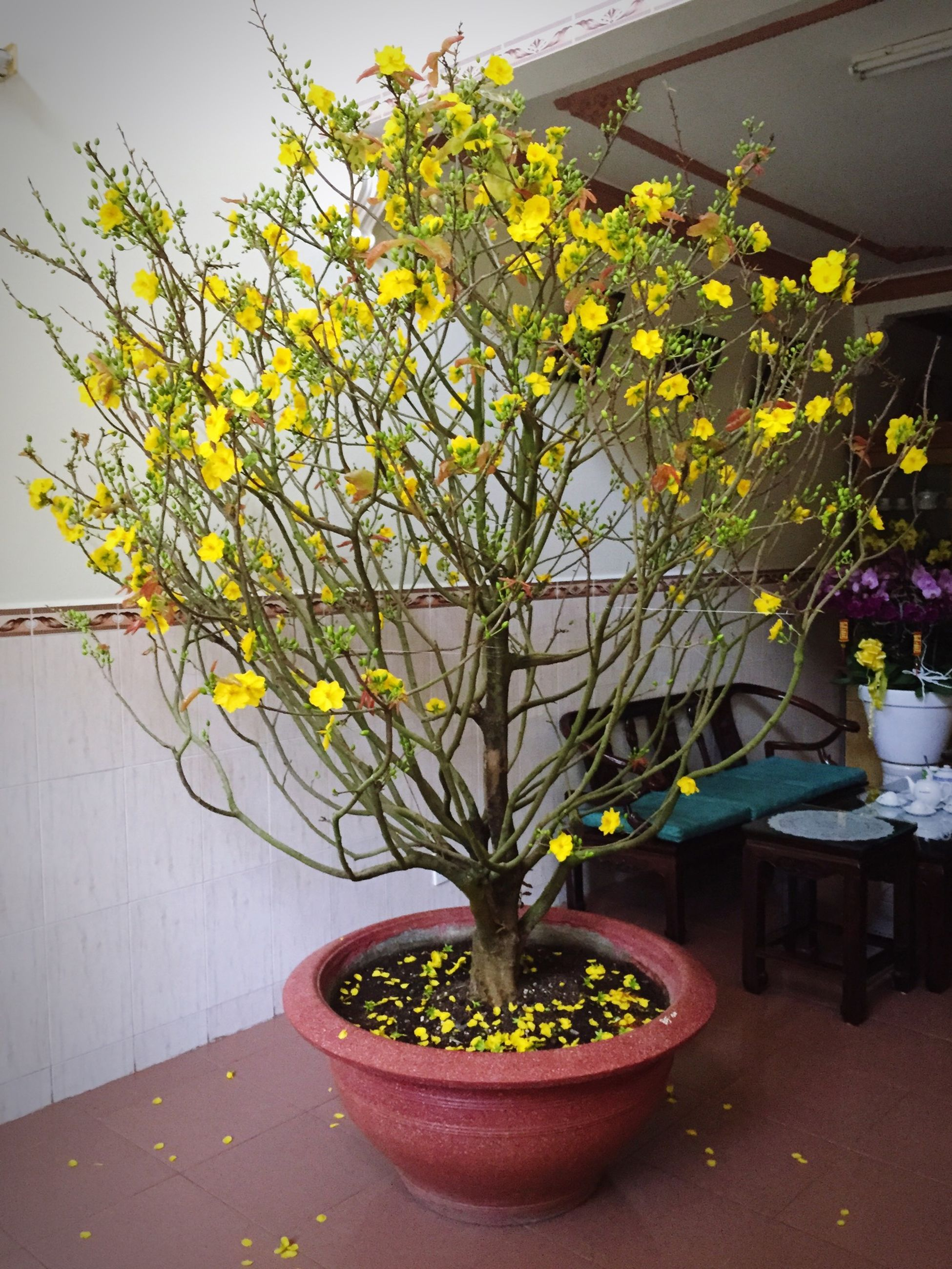 flower, potted plant, growth, plant, freshness, flower pot, vase, leaf, built structure, architecture, yellow, table, nature, indoors, fragility, wall - building feature, house, front or back yard, building exterior, no people