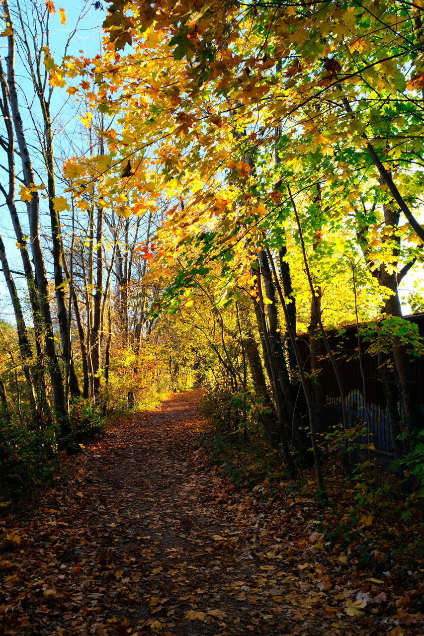 autumn, tree, change, plant, direction, the way forward, tranquility, nature, leaf, plant part, beauty in nature, no people, footpath, tranquil scene, scenics - nature, day, land, orange color, growth, forest, outdoors, diminishing perspective, woodland, treelined, fall, leaves