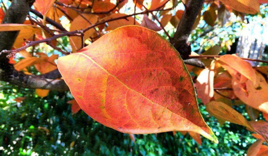 Leaf Tree Leaf