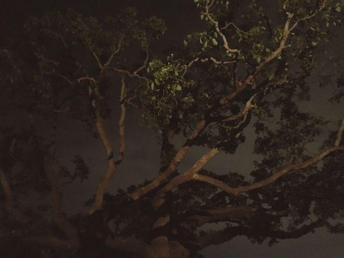 Nightphotography Night Tree California