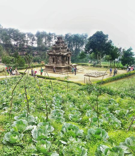 Gedong Songo Temple Central Java, Indonesia. Travel Destinations Spirituality Destination Traveling Historycal