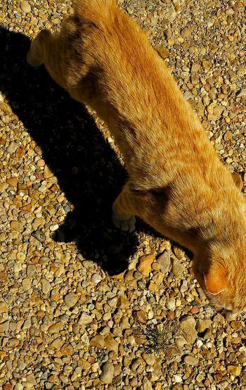 Cats Of EyeEm Animal Photography Cat Orange Tabby Cat Light And Shadow Fur Family Furbaby Furfamily Natural Light Portrait