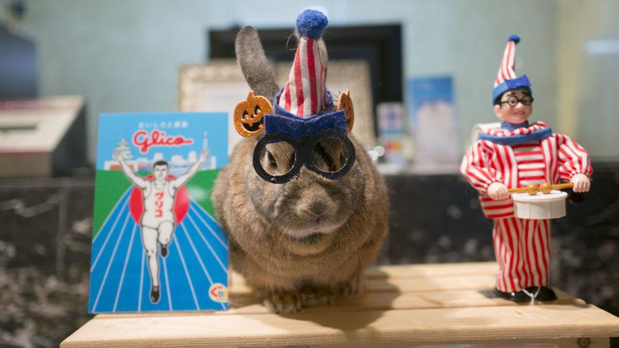 Animals Close-up Colorful Japan Mammal No People OSAKA Portrait Rabbit Toy